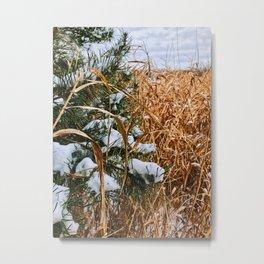 Winter field grass Metal Print