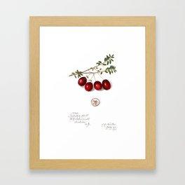 Cranberry Framed Art Print