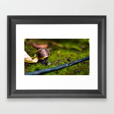 At a Snail's  Pace Framed Art Print