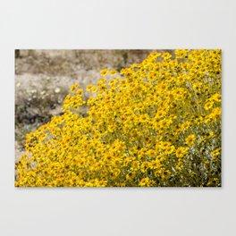 Super Bloom 7300 Paradise Joshua Tree Canvas Print