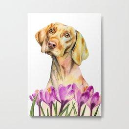 Angelic | Vizsla Dog and Crocus Flower Watercolor Painting Metal Print