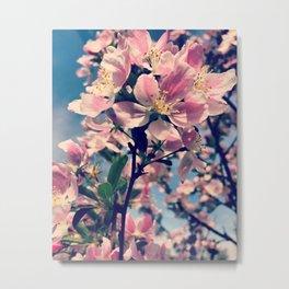 in bloom. Metal Print