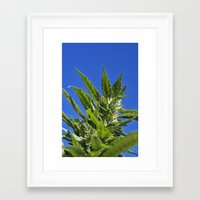 marijuana Framed Art Prints featuring Marijuana by johng
