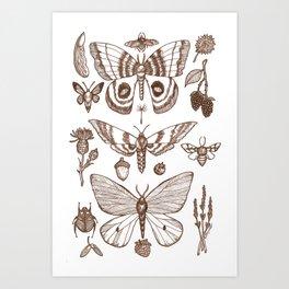 Natural History (Brown) Art Print