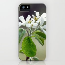 Malus flowers - spring 30 iPhone Case