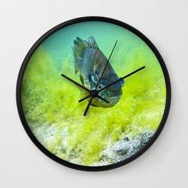 Bluegill Wall Clock