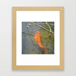 Good Fortune Coi Framed Art Print