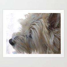 Cute Dog with snow on his snout Art Print