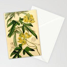 Flower 4076 phaseolus lobatus Lobe leaved Kidney Bean1 Stationery Cards