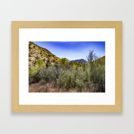 Fresh Green Plants Growing Near Underground Water by the Mountains in the Anza Borrego Desert Framed Art Print