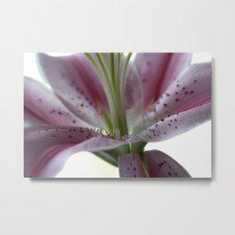 macro pink flower  Metal Print