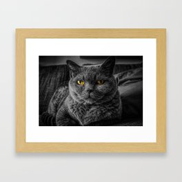 Cat with Yellow Eyes Framed Art Print