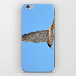 Peregrine Falcon Close Up 2 iPhone Skin