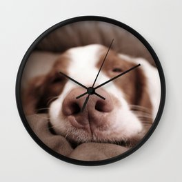 Funny Dog Photography Brittany Spaniel Close Up  Wall Clock