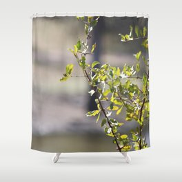 Sunny green African tree Shower Curtain