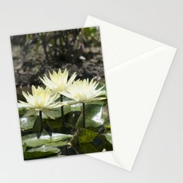 Longwood Gardens - Spring Series 275 Stationery Cards