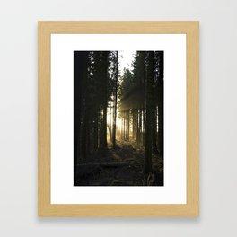Sunbeams Through the Forest Framed Art Print