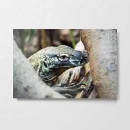 Baby Komodo Dragon Metal Print