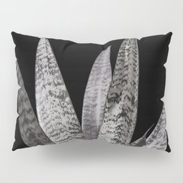 Gray snake plant with black Pillow Sham