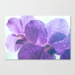 Orchid Vanda 82 Canvas Print