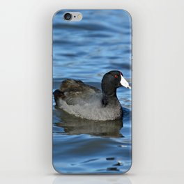 American Coot iPhone Skin