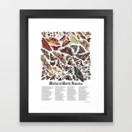 Moths of North America Framed Art Print