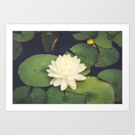 Peaceful Water Lily Art Print