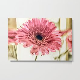 A Daisy for You a bouquet of Gerber Daisies Metal Print