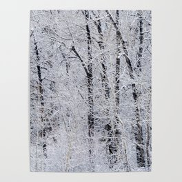 Cottonwood Frost Poster