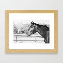 Black & White Stallion Framed Art Print