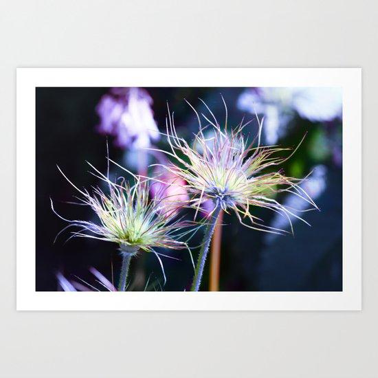 Fluffy flowers. Art Print