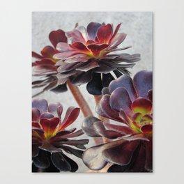 Succluents  Canvas Print