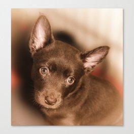 Puppy- Australian Kelpie Canvas Print