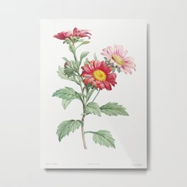 Red aster from La Botanique de J. J. Rousseau by Pierre-Joseph Redouté (1759–1840) Metal Print