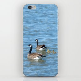 Family of Canadian Geese swimming iPhone Skin