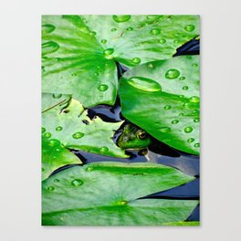 Peek  A Boo frog Canvas Print