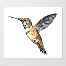 flying hummingbird watercolor sketch Canvas Print