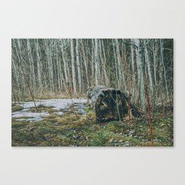 Walking by a forest Canvas Print