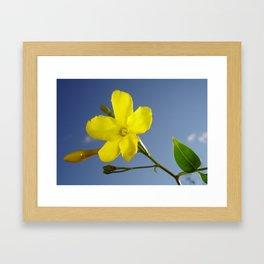 Yellow Jasmine Flower and Bud Against Blue Sky Framed Art Print