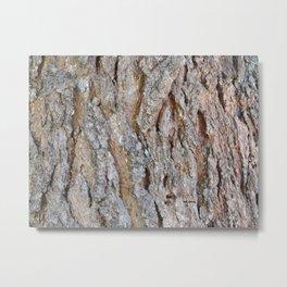 TEXTURES -- Big Cone Pine Bark Metal Print