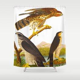 Goshawk Bird Shower Curtain