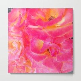 Rose Garden Metal Print
