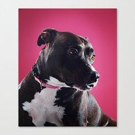 Super Pets Series 1 - Super Lucy 3 Canvas Print