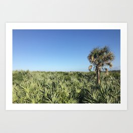 Palm Canaveral National Shore Art Print