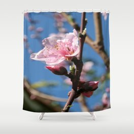 Delicate Buds of Peach Tree Blossom Shower Curtain