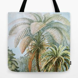 Vintage Fern and Palm Tree Art - Haeckel, 1904 Tote Bag
