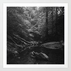 Donaldson Run, Arlington VA Art Print