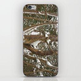 A dead pine iPhone Skin