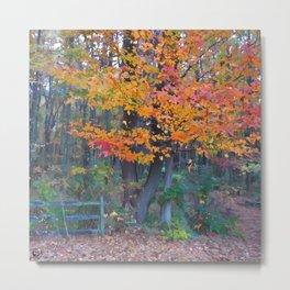 Autumn Trail at Lums Metal Print
