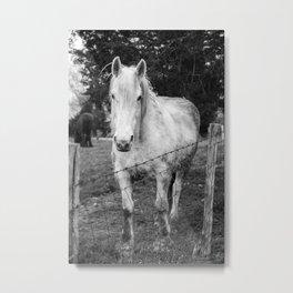 Gentle Horse Stare Down Metal Print
